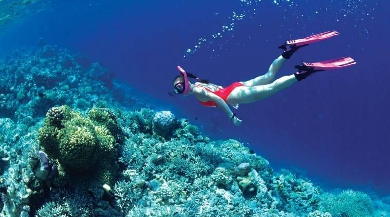 lặn biển ngắm san hô ở cù lao chàm