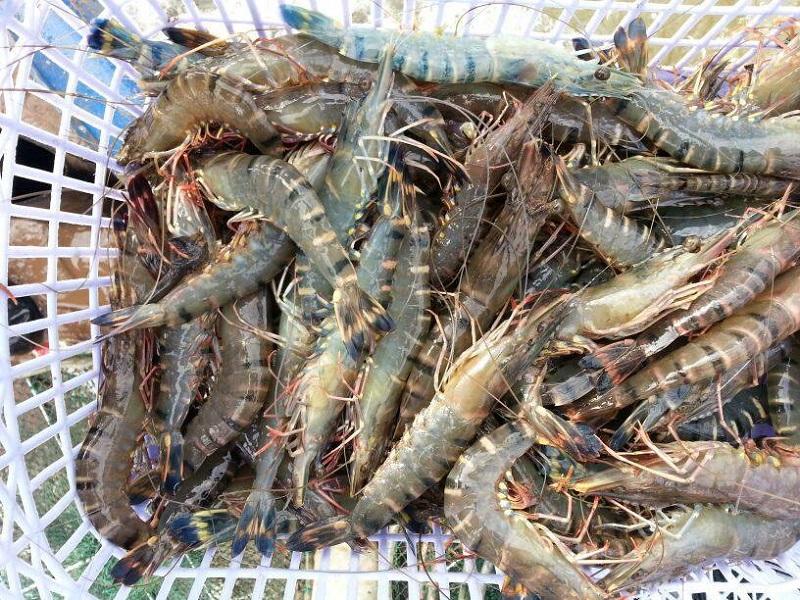 hải sản tươi sống ở đà nẵng